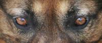 Aly's faszinierende Augen